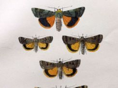 24th July 2019. Morris Moth Prints
